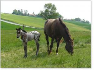 chevaux et bien-être