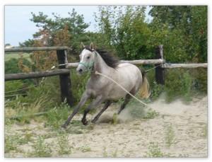 élevage de chevaux